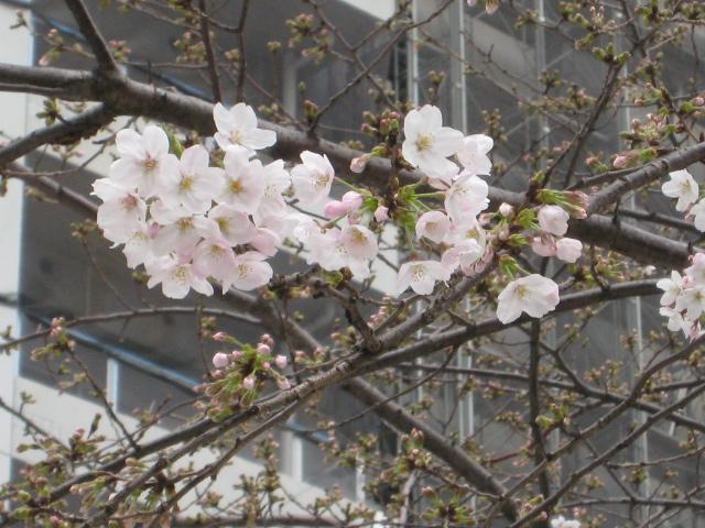 Photo_543